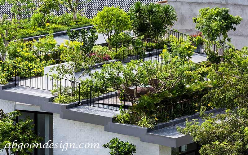 گیاهان مناسب بام سبز|آبگون دیزاین