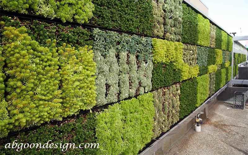 شرایط نگهداری گیاهان دیوار سبز