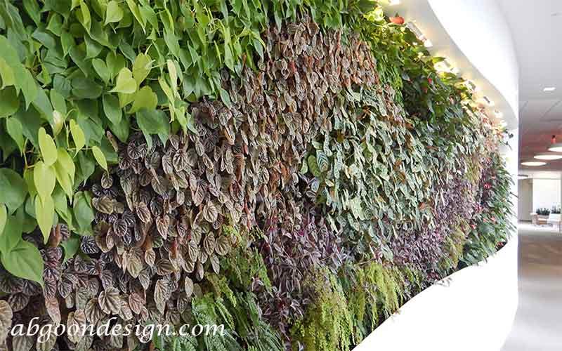 نحوه نگهداری گیاهان دیوار سبز|آبگون دیزاین