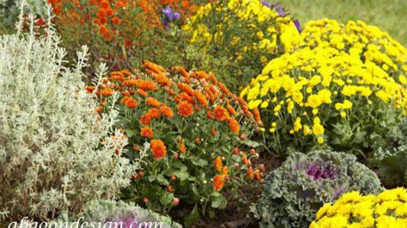 گیاهان مناسب برای محوطه سازی