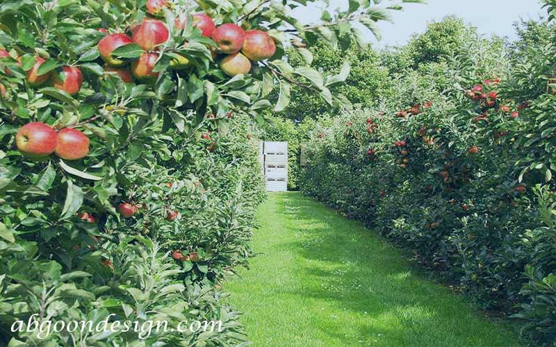 طراحی محوطه باغ میوه   آبگون دیزاین