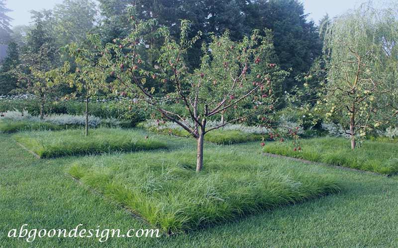 طراحی محوطه سازی باغ میوه   آبگون دیزاین