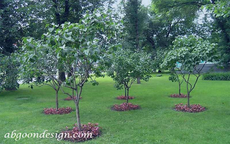طراحی محوطه سازی باغ میوه