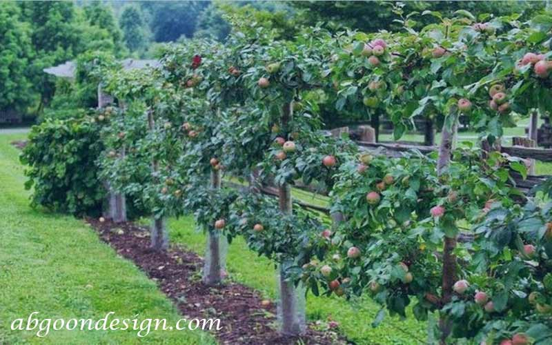 محوطه سازی باغ میوه   آبگون دیزاین
