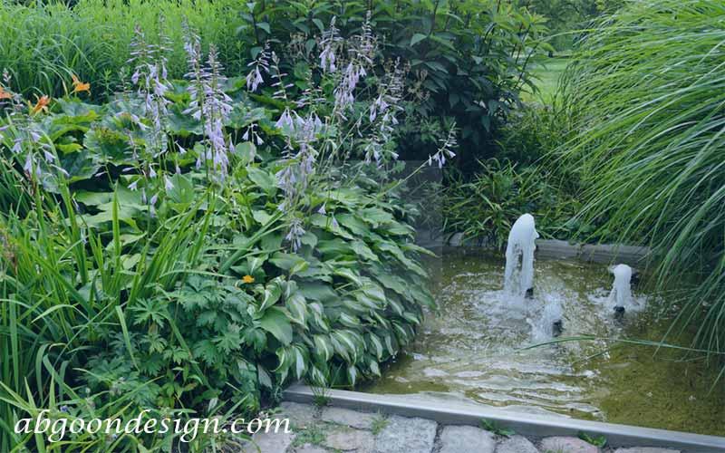 گیاهان مناسب آبنما | آبگون دیزاین